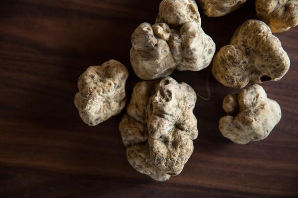 Alba White Truffles